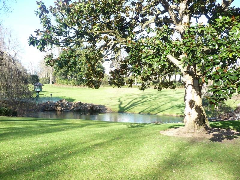 Plus vieux Magnolia du Jardin des Plantes de Nantes